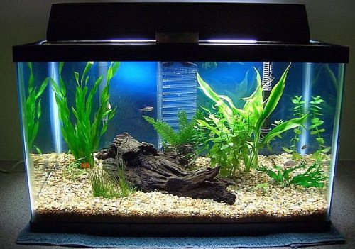 Decorating your fish tank design your own fish tank for How to decorate fish tank